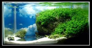 Desert Landscape Plants by 1000 Images About Aquascaping On Pinterest Planted