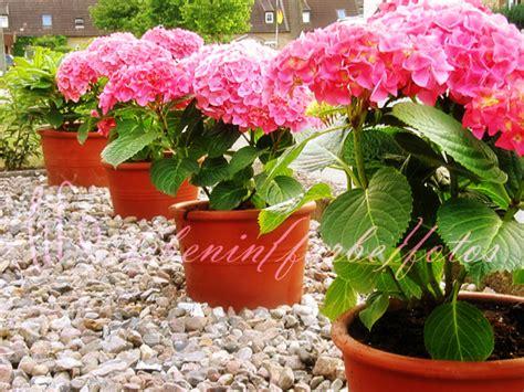Blumen Für Vorgarten by Tag 187 Blumen 171 Lebeninfarbe