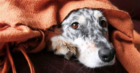 how to comfort a dog during thunderstorms if your dog is afraid of storms these 6 tips will help