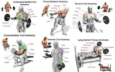 best arm best arm workout for mass bodybuilding arm