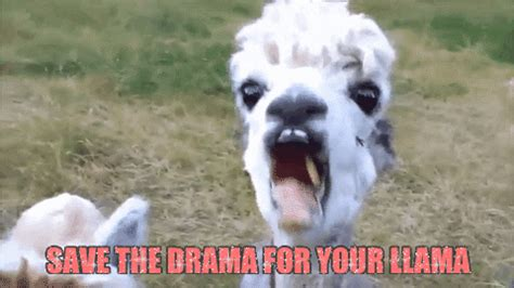 Save The Drama For Your Llama GIFs - Find & Share on GIPHY Jon Heder Twin