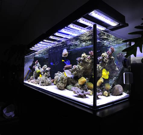 Lu Led Aquarium Diy aquarium led lighting diy diy projects