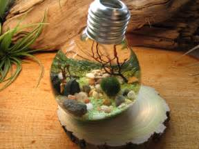Can You Recycle Light Bulbs Marimo Terrarium By Midnight Blossom Reclaimed Light Bulb