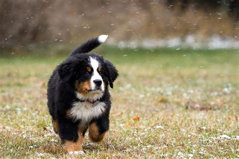 when can puppies go outside for the time 15 cutest puppies that will melt your barking royalty