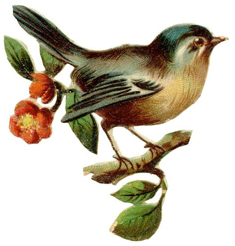 vintage bird illustration design illustration textures