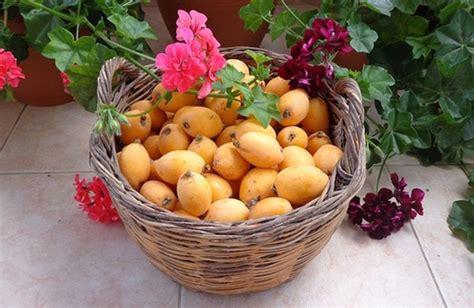 dissenteria dieta alimentare le combinazioni alimentari per chi soffre di colon