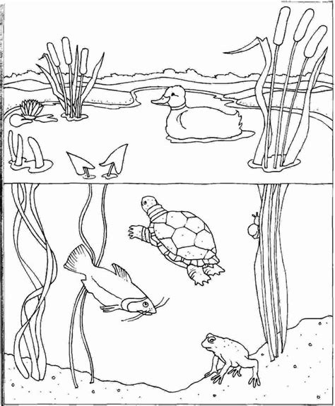 fish habitat coloring pages imprime le dessin colorier d tendu d eau