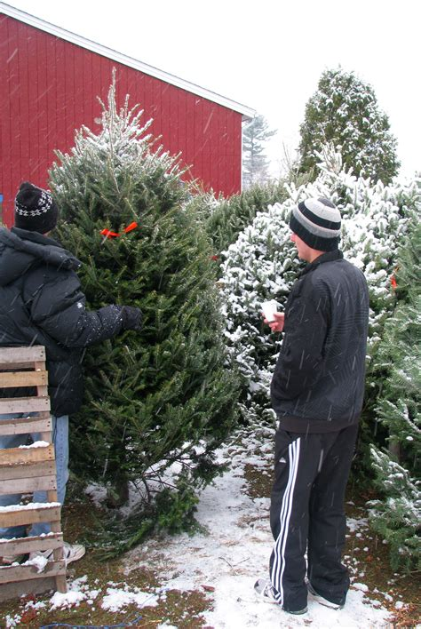 buy christmas trees to sell where to buy tree coach for more clarity about your goals values and vision