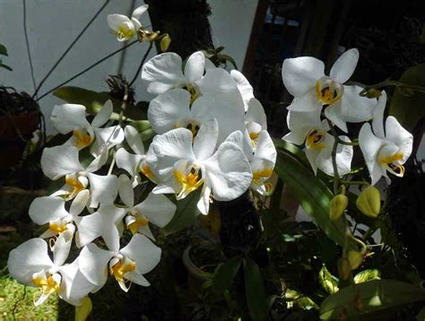 Pupuk Daun Bunga Hias panduan lengkap budidaya tanaman hias bunga anggrek