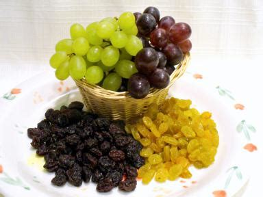 are raisins for dogs grapes raisins debate aspca poison readers respond to toxicity reports