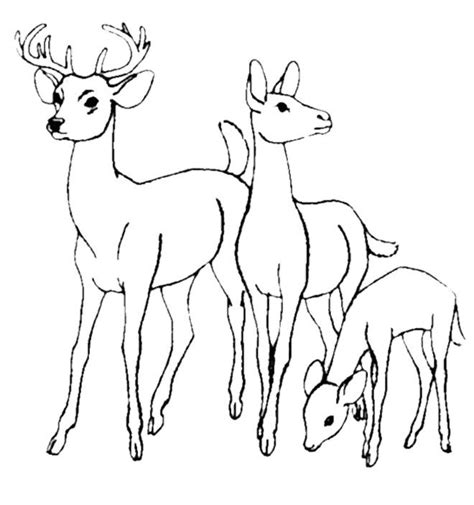 deer family coloring page family deer coloring pages as a deer pants at the stream