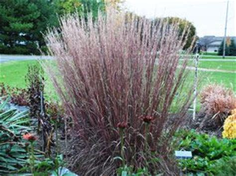 difficult plants to grow in the fall hard to and ornamental grasses on pinterest