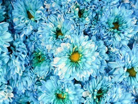 Muster Hintergrund Blumen Blau sch 246 ne fr 252 hlingsblumen blau kornblume auf hintergrund