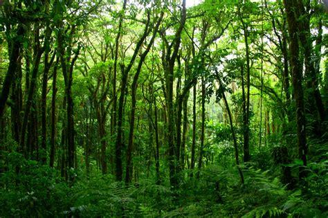 H Garden lush forest drivebysh00ter flickr