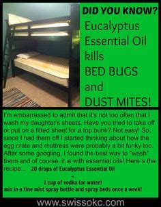 lavender oil bed bugs does lavender oil kill bed bugs 4 home remedies to kill