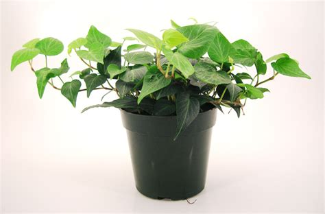 small potted plants small potted plant photos 1400743 freeimages com