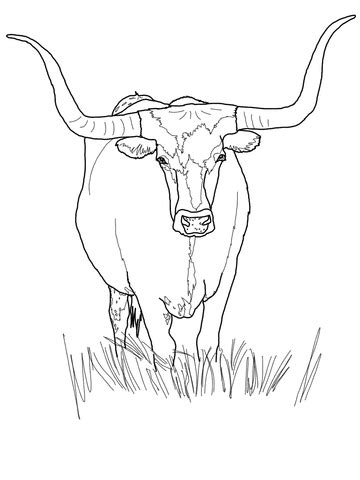 hereford cow coloring page printable texas am coloring pages freecoloring4u com