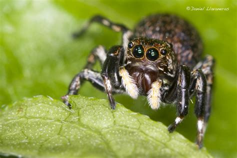 Cute Spiders Phil Ebersole S - i hate bugs casualconversation