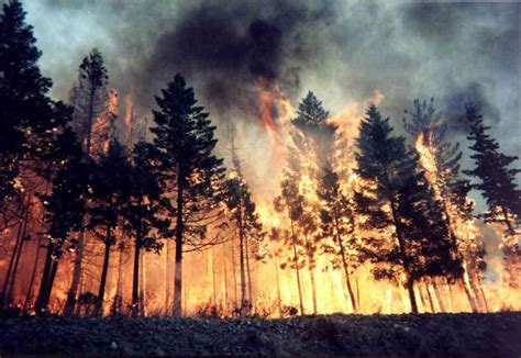Scratching Continuesvalentines Evening Wa by Oregon Forest Fires Let Them Burn Roots