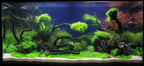Aquascape Designs Products by Adrie Baumann Und Das Aquascaping Wasserpflanzen