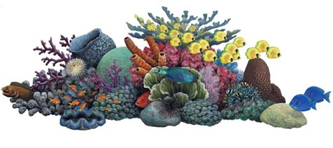 coral reef clipart clipartion com