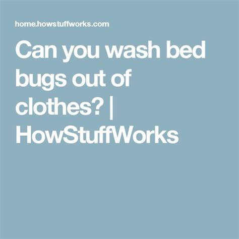 how to get bed bugs out of clothes 849 best bed bug images on pinterest bed bugs pest