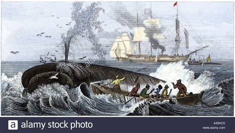 whaling longboat whaling hunting stock photos whaling hunting stock