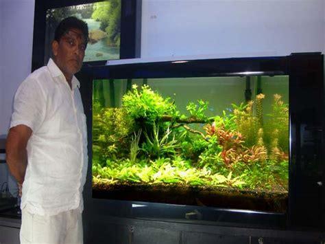 aquarium design mumbai residential aquarium