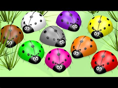 colors of ladybugs learn colors with ladybugs