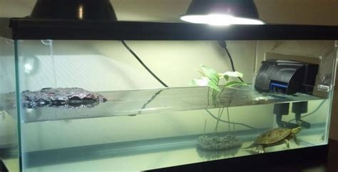 do turtles need heat ls pet turtle tank habitat cage quot how to quot setup