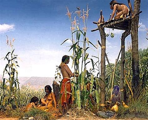 iroquois uses of maize and other food plants classic reprint books ea o ka aina indigenous farming methods