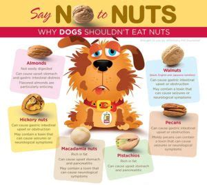 can dogs eat almonds can dogs eat almonds is it safe for dogs health