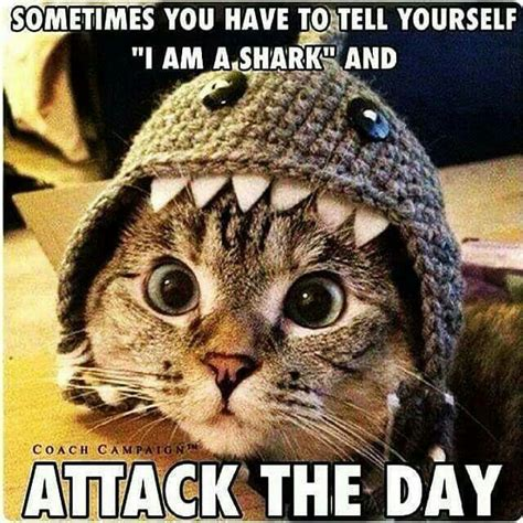 Shark Attack Meme - quote quot sometimes you have to tell yourself i am a shark