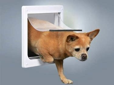 porte basculanti per cani porta basculante per cani la porta basculante