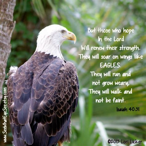 google images eagle scripture verses on eagles google search eagles