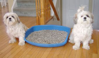 how to a puppy from a litter how to your small to use the litter box breeds picture