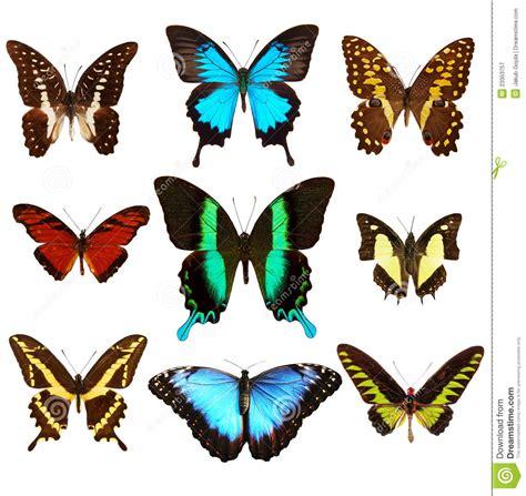 imagenes de varias mariposas mariposas fotograf 237 a de archivo libre de regal 237 as imagen