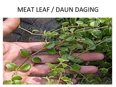 beberapa tanaman pot