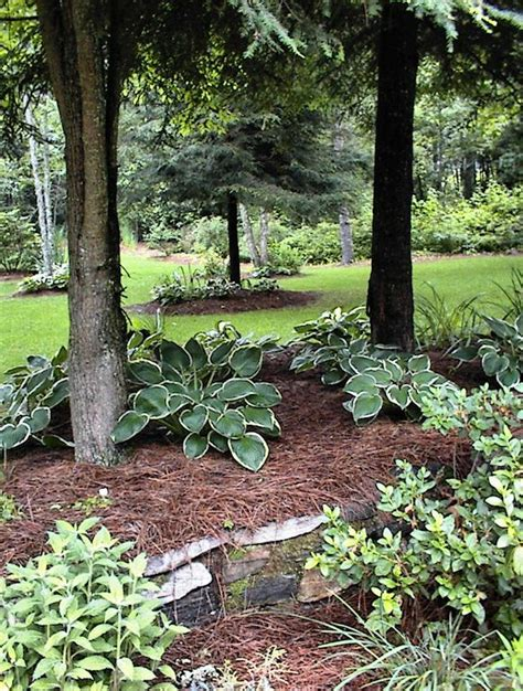 11 best images about pine straw mulch on pinterest