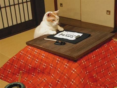japanese heated table kitty at heated japanese table writing japanese d cats