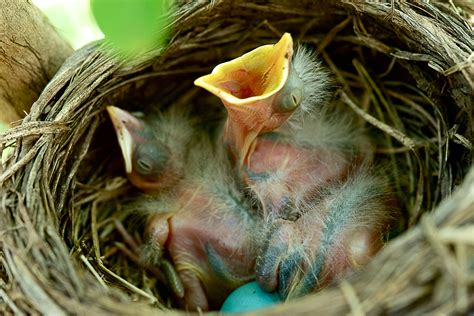 how to offer bird nesting materials in your garden the