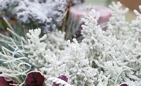 Mehrjährige Pflanzen Garten Winterhart by Winterharte Stauden Pflanzen Winterharte Pflanzen Stauden