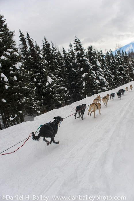 alaska list dogs 18 best images about alaska on running racing and northern lights