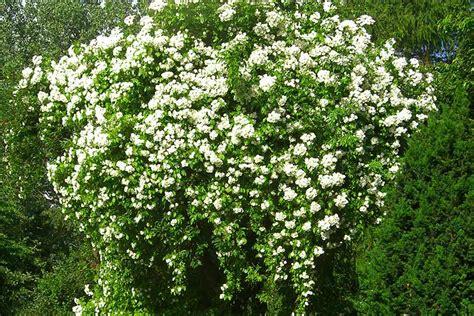 Garten Busch by Der Garten Im Laufe Des Jahres Landhausgarten Bunzmann