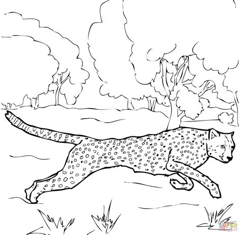 cheetah coloring page running cheetah coloring page free printable coloring pages