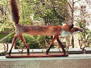 Decorate Apartment When Taxidermy Goes Wrong Bizarre Examples Of Animal Art