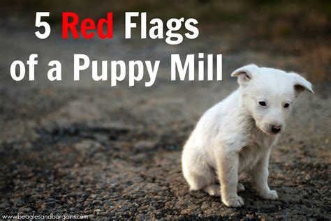 is puppy spot a puppy mill 5 flags of a puppy mill