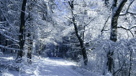 photos of snow snow covered road in the woods wallpapers and images