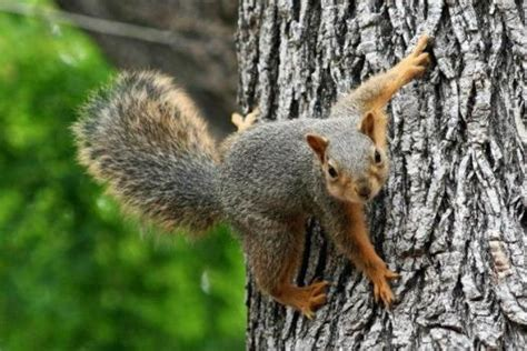 keep squirrels fruit trees 5 ways to keep pests out of fruit trees east bay times