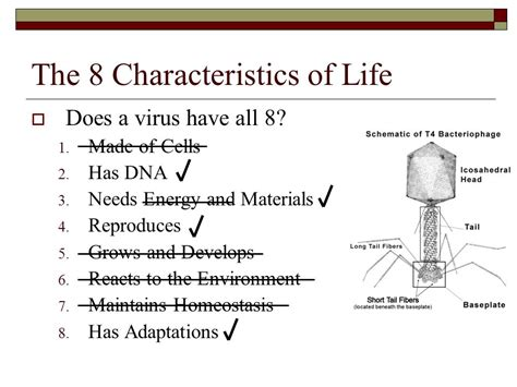 characteristics for biography microorganisms viruses bacteria ppt video online download
